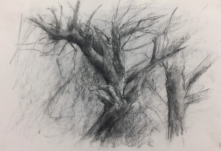 Apple tree sketch