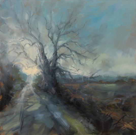 WPOld oak on the lane